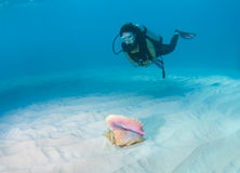 Diver and Conch shell Stock Images