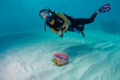Diver and Conch Shell. Female scuba diver and a beautiful conch shell on a sandy seabed in the Bahamas Stock Photos