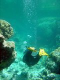 Diver in coral gully. A scuba diver negotiates a coral gully Stock Image