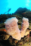 Diver and coral reef Royalty Free Stock Photo