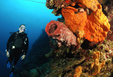 Diver on coral reef. Royalty Free Stock Photo