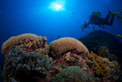 Diver on coral reef Stock Images