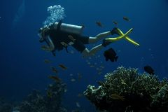 Diver. Coral reef stock photo