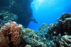 Diver in the corals Royalty Free Stock Image