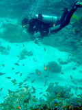 Diver with corals and fish. A scuba diver hovers over the coral reef Royalty Free Stock Photos