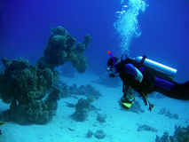 Diver in deep. Underwater landscape with scuba diver royalty free stock photo