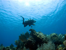 Diver descending on a Cayman Island Reef. Shot from below Stock Photography