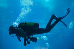 Diver diving with a scuba set. In the sea stock photography