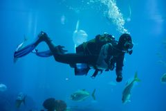 Diver diving with a scuba set. In the sea royalty free stock images