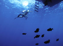 Diver and durgon. Diver returning to dive boat with a school of Black durgon fish below stock image