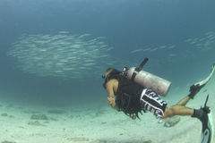 Diver entering Inside a giant barracuda bait ball underwater. Scuba while going Inside barracuda school of fish in the reef and blue sea Stock Photography