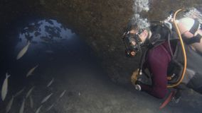 Diver explores a school of fish in a sea tunnel. A underwater slow motion shot of a scuba diver as he explores the life underwater. A school of fish swims under stock video