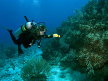 Diver Exploring the Reef with a Flashlight Royalty Free Stock Images