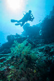 Diver and feather black coral in Derawan, Kalimantan, Indonesia underwater photo Stock Images
