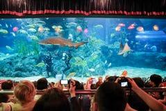 diver feeding royalty free stock photo