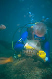 Diver Feeding Fish. SCUBA Diver feeding clam to fish - Puerto Penasco, Mexico Stock Photo