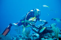 Diver feeds Fish Stock Photography