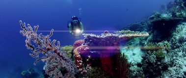 A diver, female, swimming in a colorful coral reef towards the camera with a headlight stock video