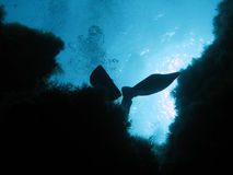 Diver fins Royalty Free Stock Photography