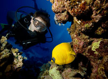 Diver and fish Royalty Free Stock Photography