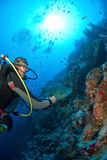 Diver with fish. On the reef Stock Photography