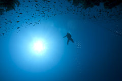 Diver, fish and coral Stock Photography