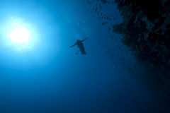 Diver, fish and coral Stock Image