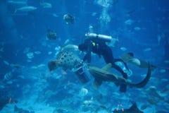 Free Diver Fish Feeding Frenzy Royalty Free Stock Photos - 140043738
