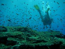 Diver and fish on top of a reef. Maldives royalty free stock photography