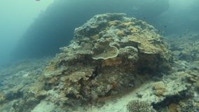 A diver gets past a coral reef. A two shot of a scuba diver and a coral reef getting past by the diver. Small fishes swims near the coral reef stock video