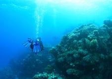 Diver - girl underwater stock photos