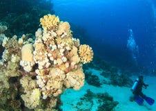 Diver - girl underwater stock images