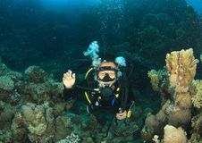 Diver - girl underwater. Tropical girl - young Indonesian woman dressed up into wetsuit and BCD scuba diving in sea with mask and regulator, swimming among hard royalty free stock photo