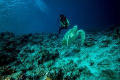 Diver and green sea turtle in Derawan, Kalimantan, Indonesia underwater photo Stock Photos