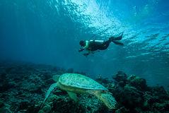 Diver and green sea turtle in Derawan, Kalimantan, Indonesia underwater photo Royalty Free Stock Image