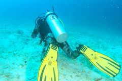 Diver in khaki wetsuite. Diver guide dressed up into khaki wetsuit and BCD with bottle and yellow fins scuba diving in sea in shallow water above sand in Raja stock photos