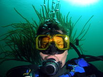Diver with hairdo. Diver sea rod hairdo at 25 feet in South Florida Royalty Free Stock Photo