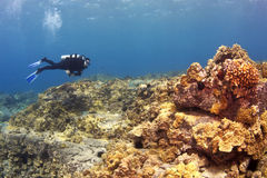 Diver on a Hawaiian Reef Royalty Free Stock Photography