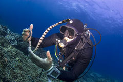 Diver holding a seasnake Royalty Free Stock Photography