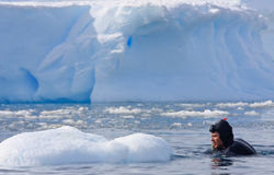 Diver on the ice. Against the blue iceberg. Antarctica Royalty Free Stock Image