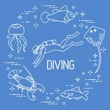 Diver, jellyfish, lobster, stingray, fish. Sports and recreation theme Stock Photography