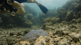 Diver leaves a dead creature lieing on ocean floor. A shot of a scuba diver leaving a creature sitting on dead coral reefs stock video footage
