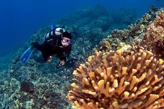 Diver looking at the Coral in Kona Hawaii. With blue water Royalty Free Stock Images