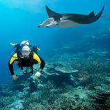 Diver and manta. Underwater. Coral reef on background Royalty Free Stock Photography