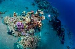 Diver met octopus Stock Image