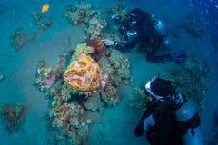 Diver met octopus Stock Photos