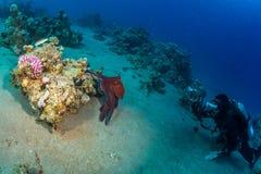 Diver met octopus Royalty Free Stock Photos