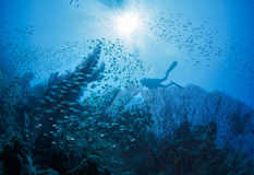 Diver next to coral stock images