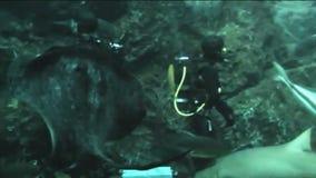 Diver in oceanarium feeding fish stock footage