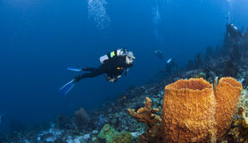 Diver and Orange Sponges in St Lucia Stock Image